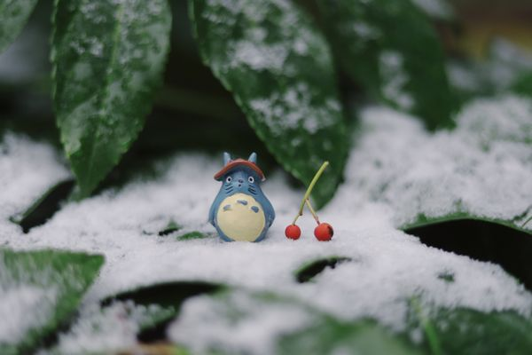 My Neighbor Totoro i Jung